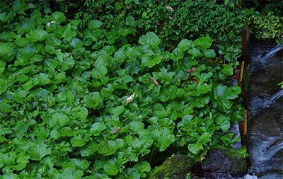 wasabi-green-lr